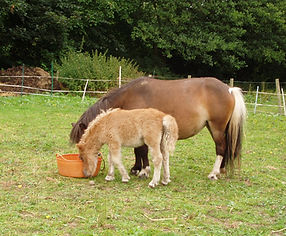 pony and pony foal