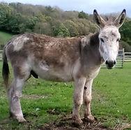 H.A.C.K. Horse Donkeys