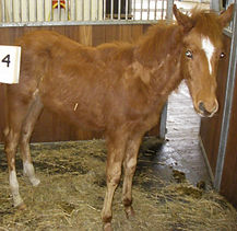 Rescued  racehorse