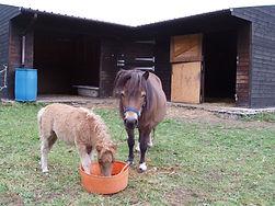 H.A.C.K. Horse Rescue facilities