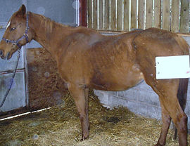 Rescues Racehorse