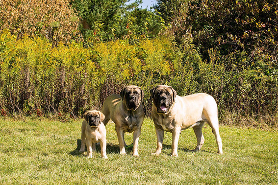 Grandpa Diesel, his daughter Rogue and her baby Acheron