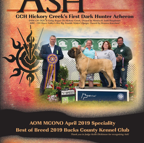 Ash's ad in the 2019 Mastiff Club of America journal