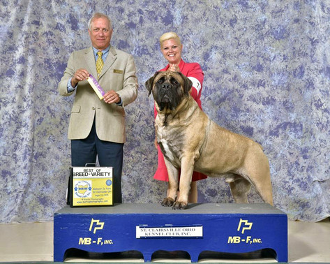 Diesel Best of Breed