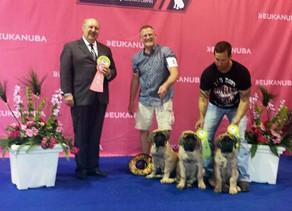 Puppies go the Mastiff Nationals!