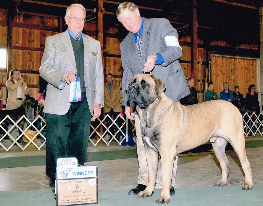Diesel finishes his AKC championship