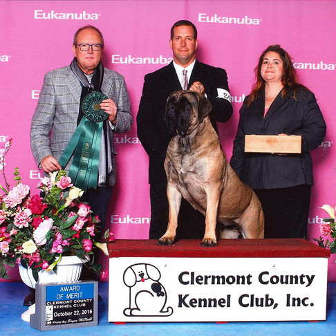 Rogue takes an Award of Merit at the Clermont County Kennel Club