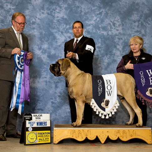 Rogue wins Winners Bitch & Best of Winners at the Trenton Kennel Club!