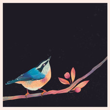 Nuthatch_Colour_Collective_.jpg