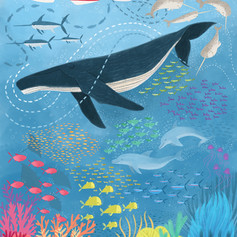 Whale and reef