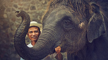 "New 2018 Hutsadin Elephant Foundation Calendar. 6"" X 8"" Desktop Calendar."