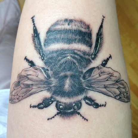 Lucy's Bumble Bee