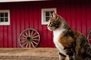 barn_cat.jpg