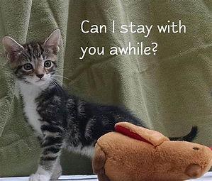 foster kitten.jpg