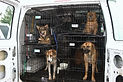 dog-transport-van.jpg