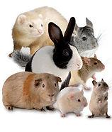 pocket-pets.jpg