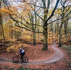 steve peat woodland Trail