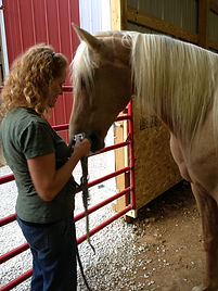Equine Assisted Therapy, Counseling, Christian Counseling, St. Louis, therapy, horses, Jefferson County