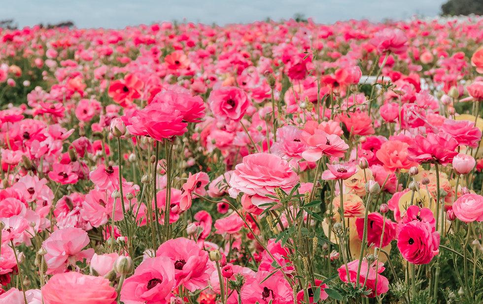 flowerfields_3000.jpg