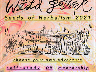 seeds of herbalism 2021 registration is now open!