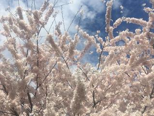 spring's caress