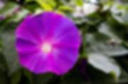Page 3  flores apresentar_editado.jpg