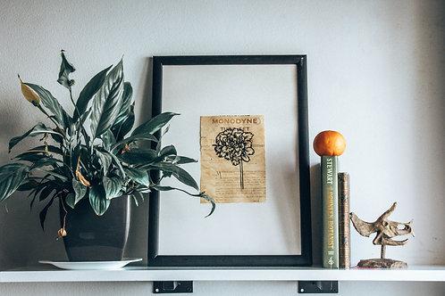 Marigold  200 Seeds and Print Box
