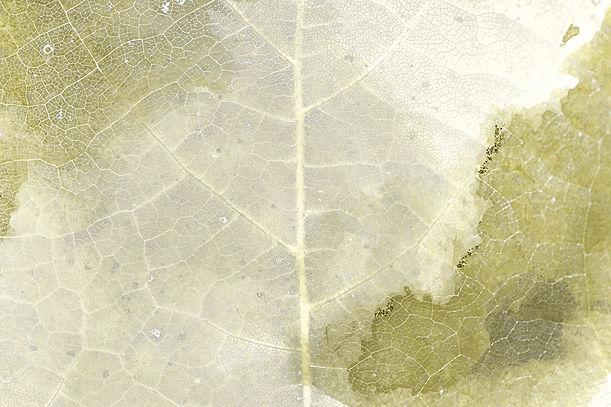 Carmen-Hegmann-Blatt-Gelb-Detail.jpg