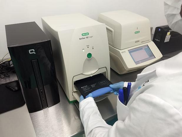 PCR en proceso 2.jpeg