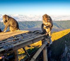 Monkeys on Mount Batur, Bali