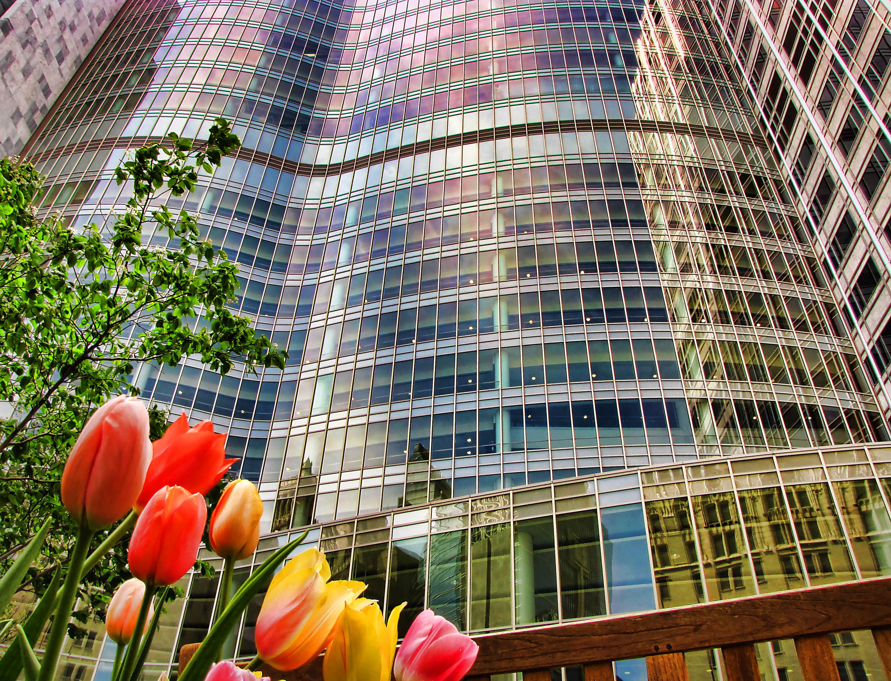 gonda wall tulips lomo