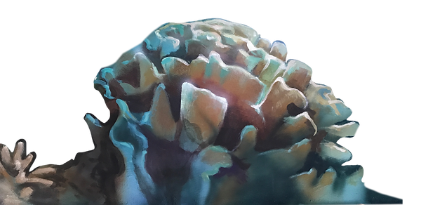 coral1alpha.png
