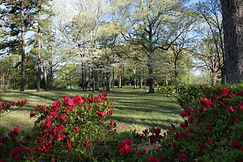 Front yard in spring.JPG