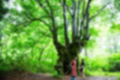2020.06.26_繝ュ繧、繝、繝ォ閭主・繝上z繝シ繧ッ繝帙ユ繝ォ讒・RTPH