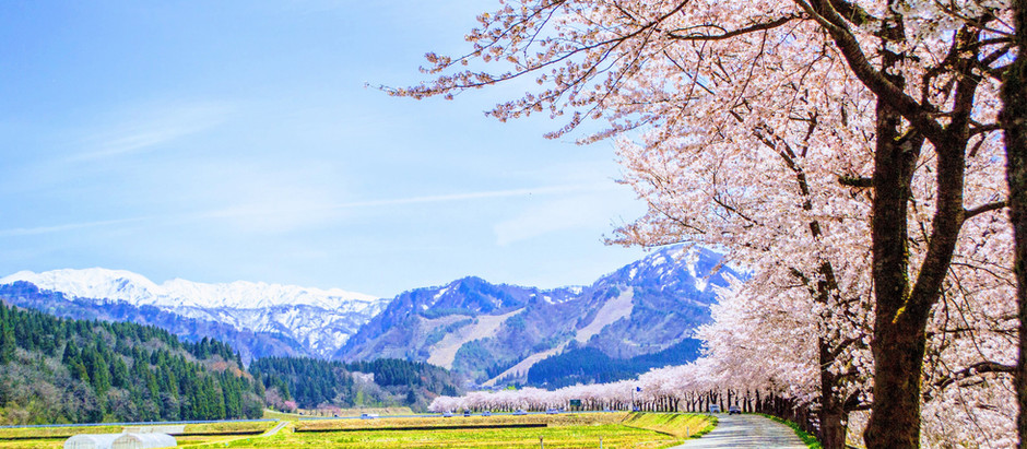 お花見シーズンに外せない桜の名所