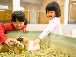 小動物ふれあい体験、アルパカのエサやり体験について
