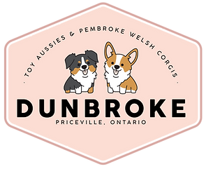 Dunbroke Toy Aussies and Pembroke Welsh Corgis - Priceville, Ontario - Dog Breeder - Eleanor Design & Marketing