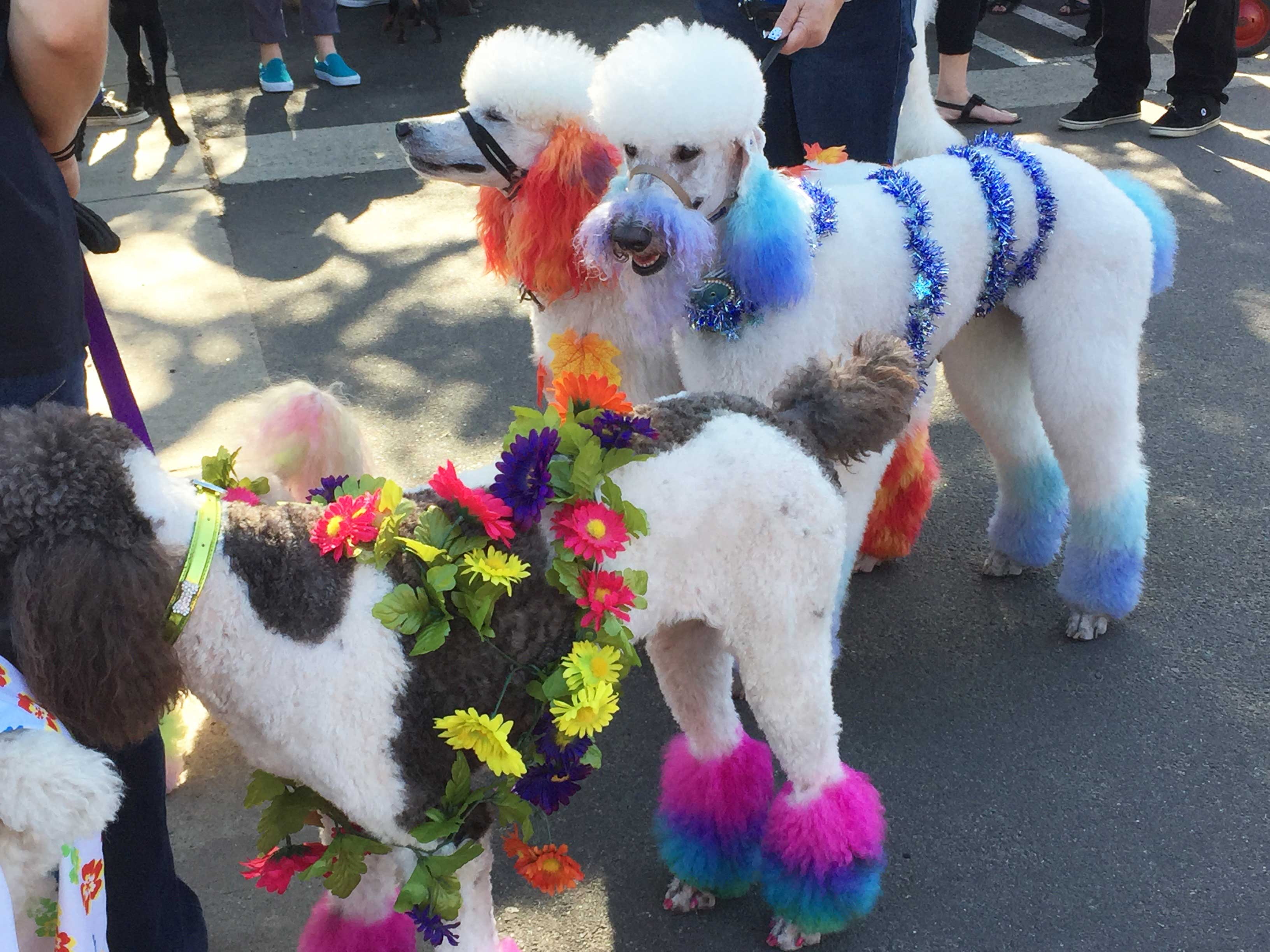 ColorfulParticipants