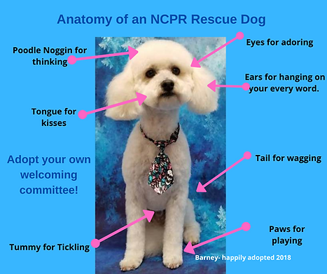 Anatomy of a Rescue Dog.png
