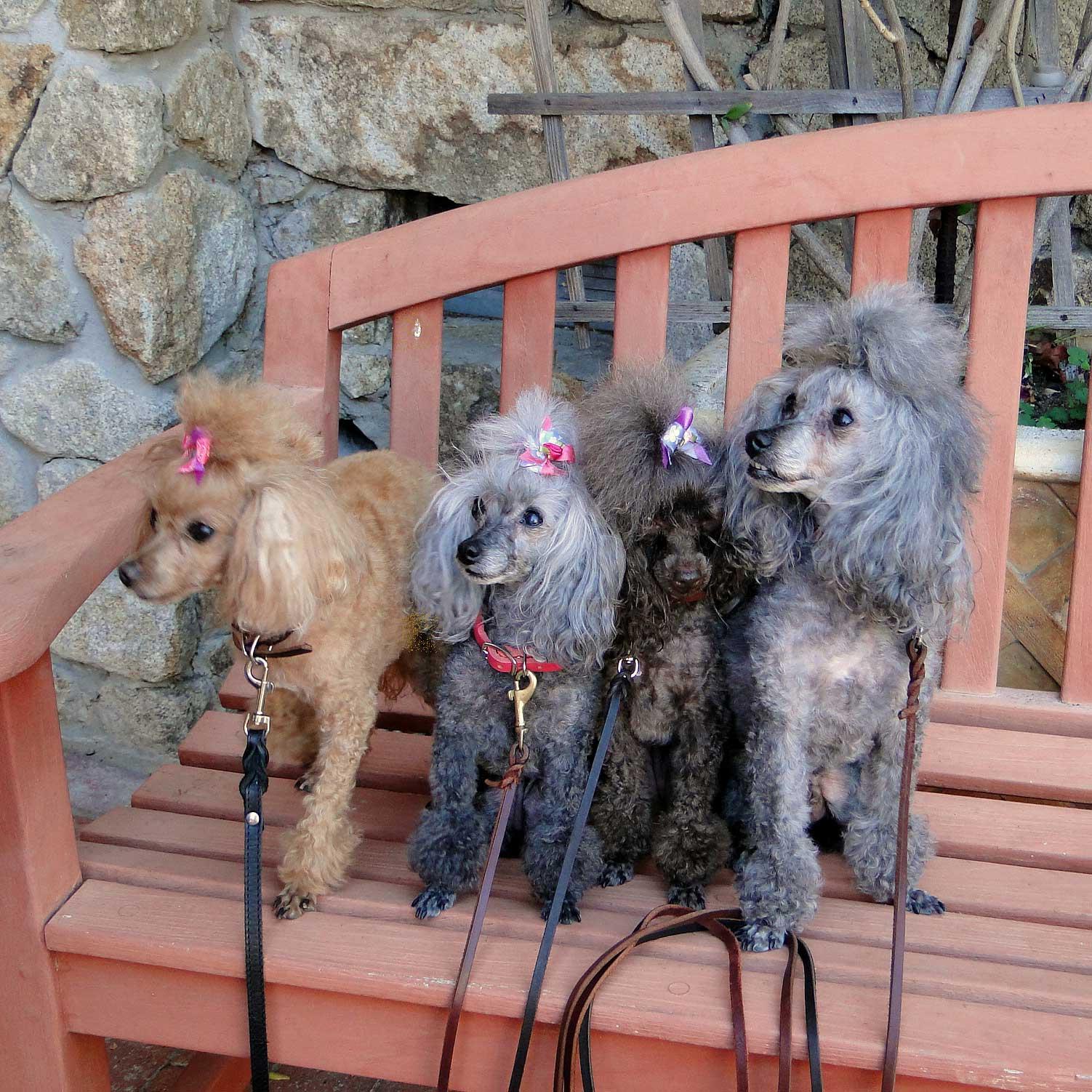 4-pups