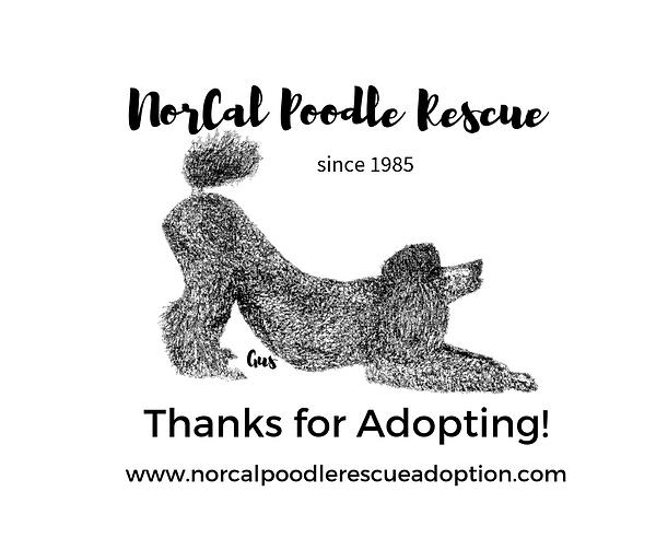 NorCal Poodle Rescuetote bag.png