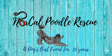 NorCal Poodle Rescue-2.png