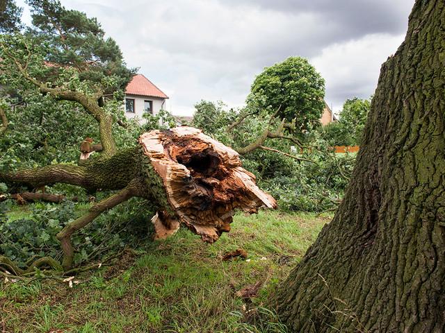 tree fallen_2x.jpg