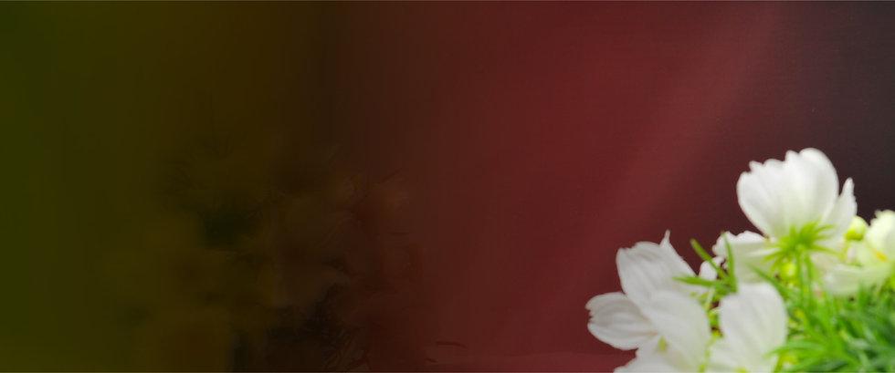 Banner_Web Revamp 1.0_Snowberry Collecti