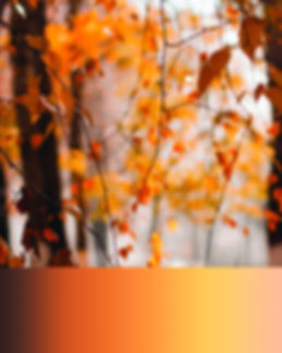 Autumn (2).jpg