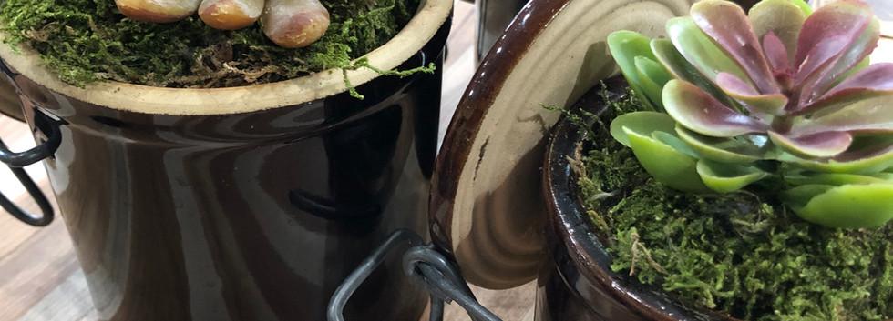 Succulent Crocks