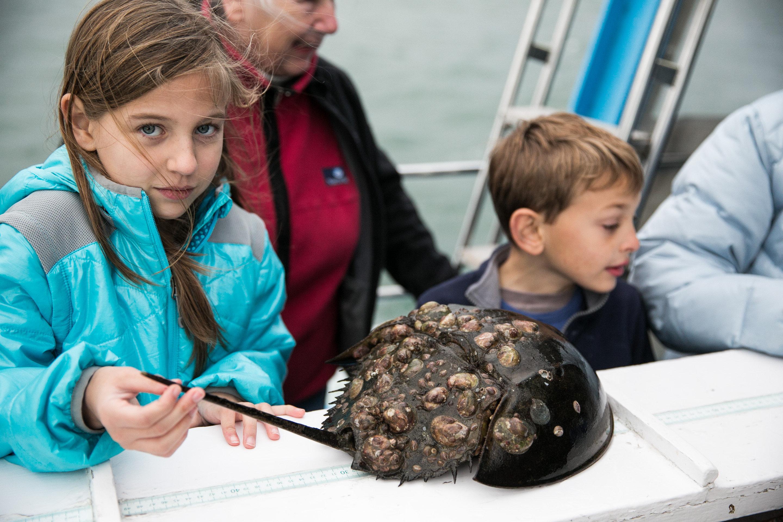 Marine Habitats Studies