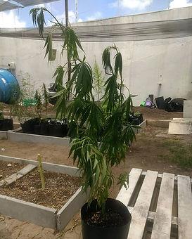 Outro dia postei 2 fotos de uma planta d