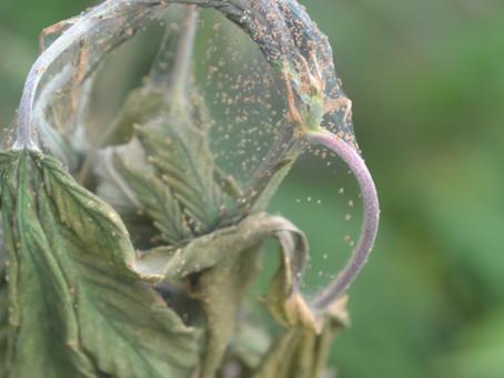 Identificação e controle biológico de pragas