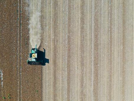 Sojabohnen Ernte